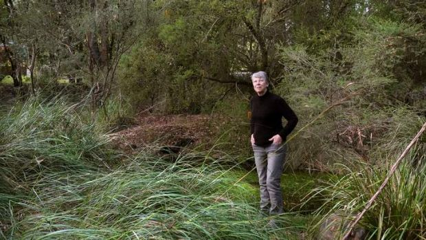 Labour of love: Marilyn Bull fell in love with Australian plants in her 20s.