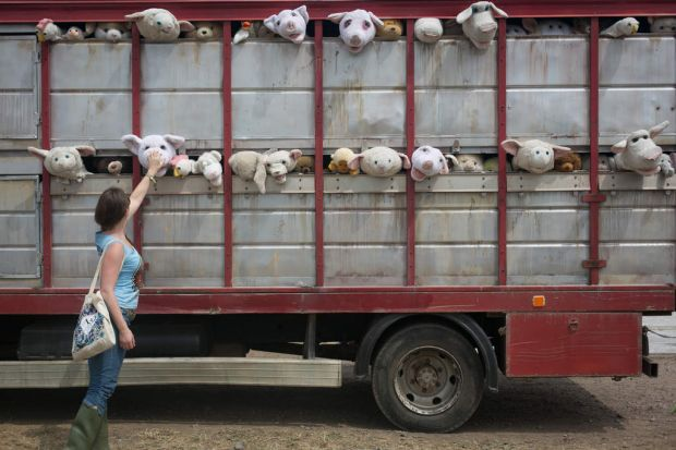 A festival goer touches part of a sculpture by Banksy, entitled 'The Sirens of the Lambs', depicting a truck full of ...