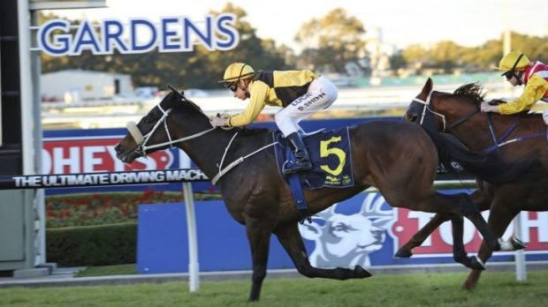 Never say never: Blake Shinn pilots You'll Never to victory at Rosehill on Saturday.