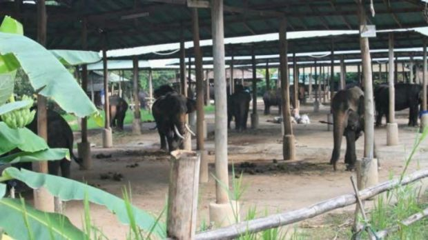 An elephant camp in Chiang Mai province, Thailand, that is home to seven illegally caught elephants.