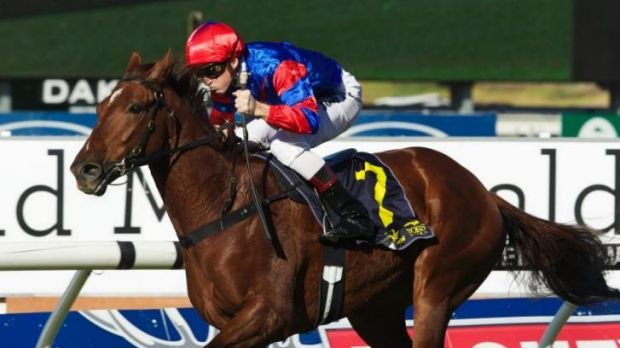 High promise: Co-owner Greg Kolivos hopes Pajaro will develop into a cups horse.