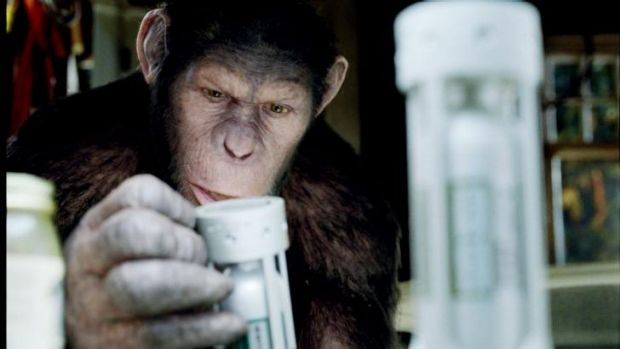 Caesar the intellect-enhanced chimp in <i>Rise of the Planet of the Apes</i>.