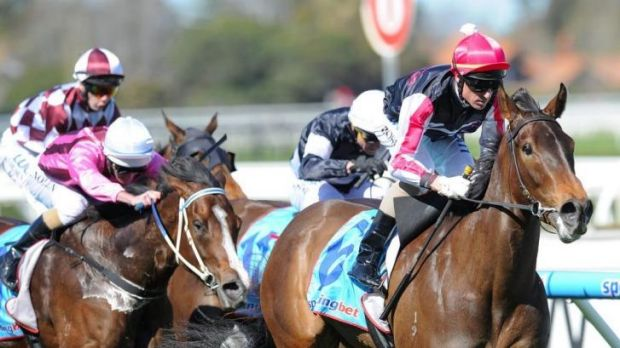 Worth a punt: Vain Queen is clearly the best bet on Saturday's rich Flemington program