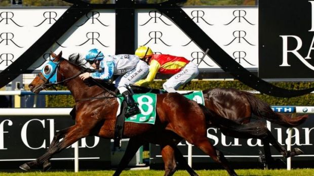 Well timed: Lester Grace drives juvenile Testashadow to his first win on Saturday at Randwick .