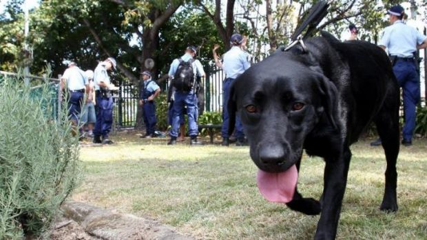 One band member has written to the NSW State Government asking for sniffer dogs to be excluded from Splendour in the Grass.