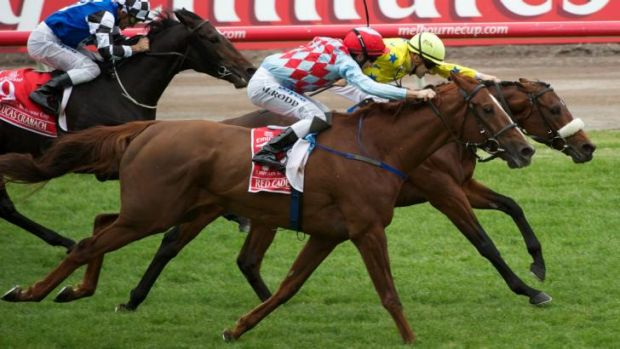 Racing Victoria officials are investigating the possibility of races such as the Melbourne Cup being broadcast in ...