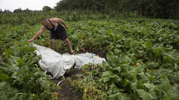 A man covers a body near the wreckage of MH17.