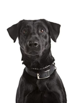 Pick me! The study suggested a basic instinct in dogs to express displeasure when a rival is seen receiving attention.