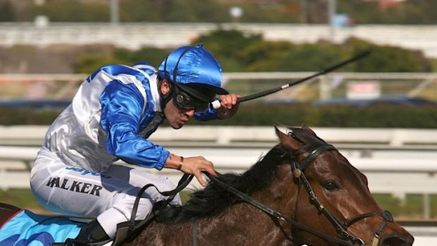Stud-bound: The next stage beckons for Lady of Harrods after Saturday's Kensington meeting.