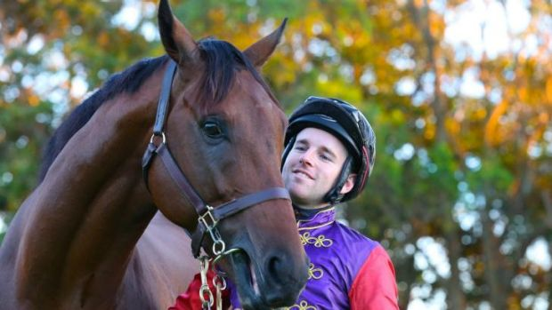 Back in the saddle: the Queen's horse, Carlton House, will have an exhibition gallop at Randwick on Saturday.