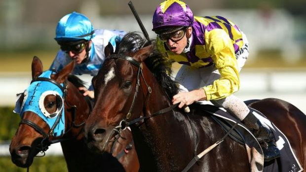 On the rise: Josh Parr steers Blademeister to victory at Randwick.