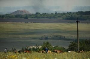 A man herds his cattle on high ground in Kirovsky overlooking the MH17 crash site where Ukrainian forces and Pro-Russian ...