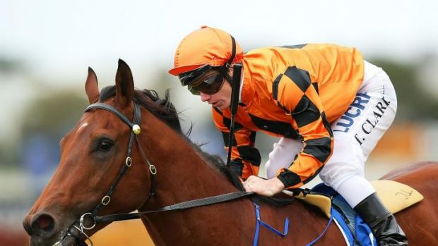 Weighed down: Liberation was impressive last start but gives up as much as 10kg to rivals at Rosehill today.