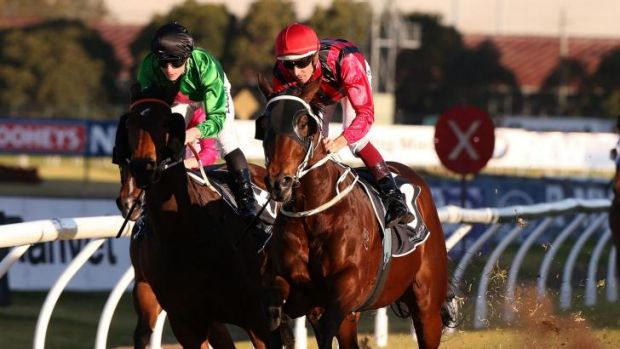 Rocky Sturdy wins at Rosehill on Saturday