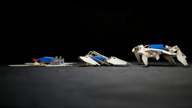A self-folding crawling robot in three stages.