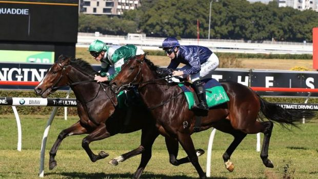 On trial: Josh Parr guides Almalad (green) while Tommy Berry pilots Valentia in an exhibition gallop at Randwick on Saturday.