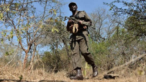 On patrol: A park ranger scouts for possible poachers in a section of Kruger National Park.