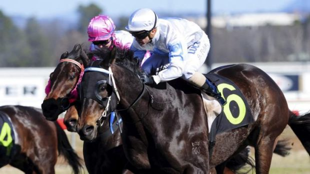 Scott Pollard rides Tingeera to victory at Thoroughbred Park on Friday.