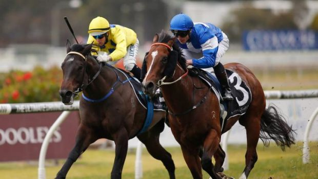 Predicting great things: Nostradamus (blue and white) takes out the San Domenico Stakes at Rosehill on Saturday.