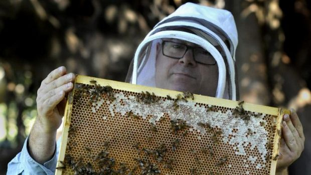 Urban Beehive founder Doug Purdie inspects a beehive after extracting  honey for the first time at the Royal Botanic ...