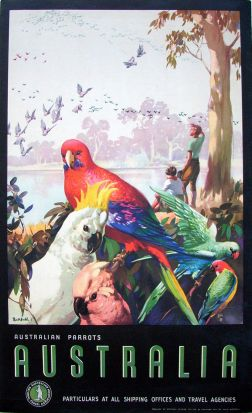 James Northfield - Australia. Australian Parrots.