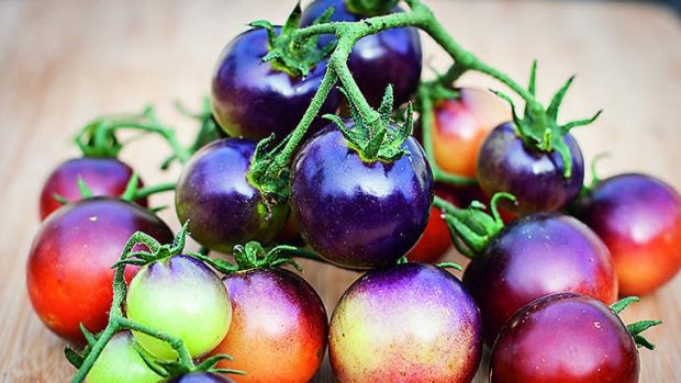 Old style: These tomatoes more closely resemble their ancestors than most grown today.