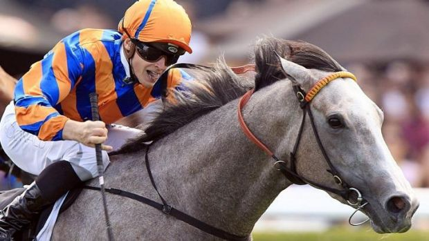 Anthony Cummings is confident Villa Verde will be hard to toss in Saturday's $120,000 Carlyon Stakes.