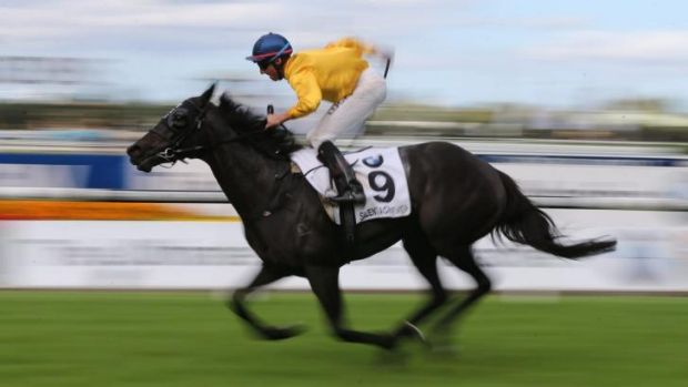 Memsie bound: Brilliant New Zealand mare Silent Achiever.