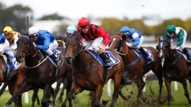 Crown jewel: Joshua Parr pilots Hallowed Crown (red and black) to victory in the  Run To The Rose on Saturday.