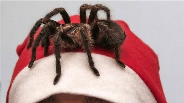 A spider was taken hostage by Bryan Paul Smith - a spidernapper.