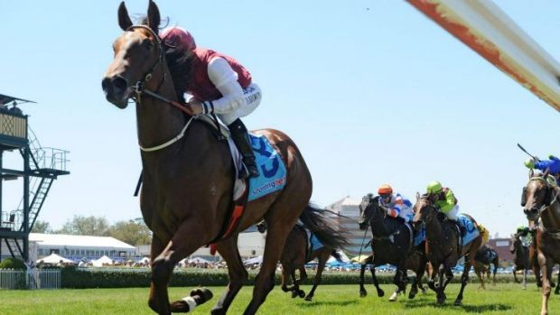 Star filly: Blue Diamond winner Earthquake resumes in the Furious Stakes on Saturday.