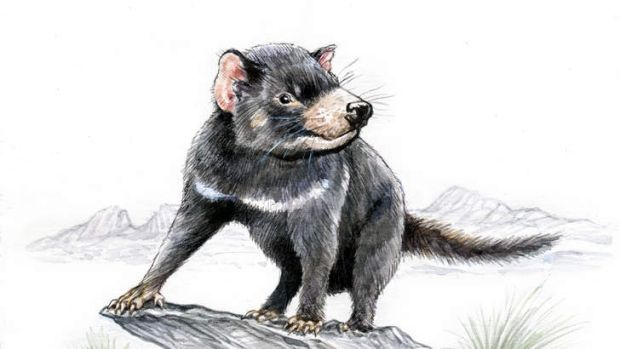 Tasmanian devil. (Illustration by Joe Benke.)