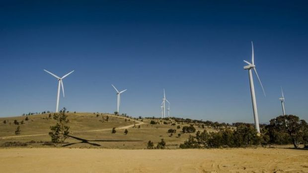 The Capital Wind Farm in Canberra.