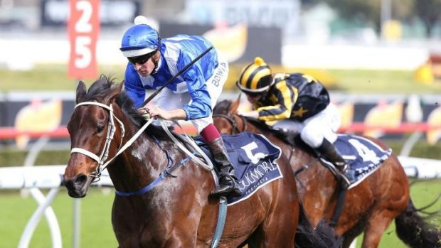 Doing the family proud: Winx takes the group 2 Furious Stakes at Randwick to cap a stellar month for her sire, Street Cry.