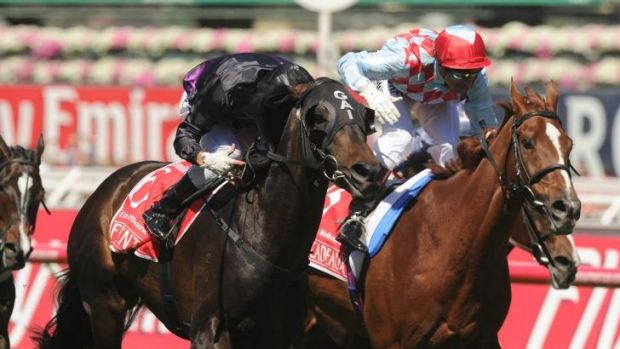 Fourth time around: Dual Melbourne Cup runner-up Red Cadeaux, right, is back for another tilt at the Big One.