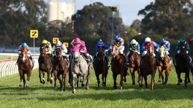 Class act: Catkins (pink) strides clear at Rosehill on Saturday.