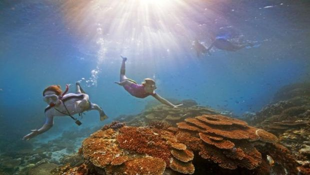 Conservationists worry the Great Barrier Reef management plan is too little, too late.