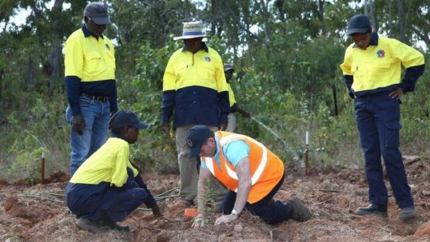 Down to earth: Prime Minister Tony Abbott assists with a tree planting in north-east Arnhem Land on Monday.