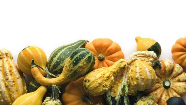 Gourd haul:  Treat gourds like pumpkins. Give them a heck of a lot of feeding.