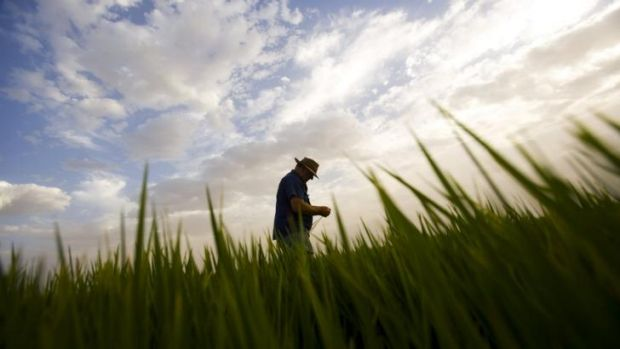 Job numbers in agriculture are growing strongly, thanks to Chinese demand.