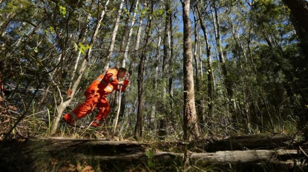 A SES volunteer walks through the bush searching along Haydons Road in the Middle Brother State Forest approximately ...