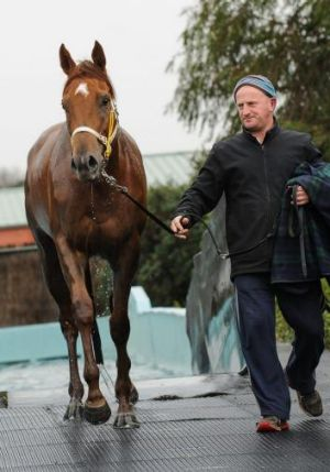 Leading Sydney jockey Tom Berry has opted to stay with the Gai Waterhouse-prepared Sweet Idea (above) for the Sir Rupert ...