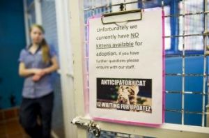Sign of the times: The RSPCA has no kittens for adoption.