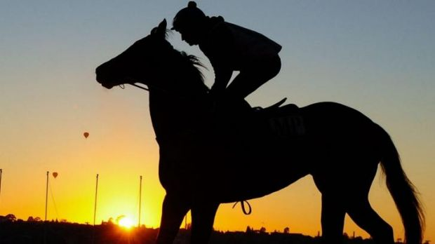 Shining: Craig Newitt puts Lankan Rupee through his paces at Moonee Valley.