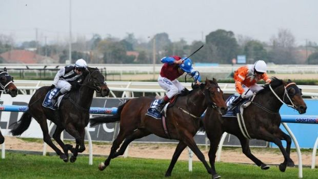 Well worn path: Spillway will tackle The Metropolitan en route to a crack at the Caulfield Cup.