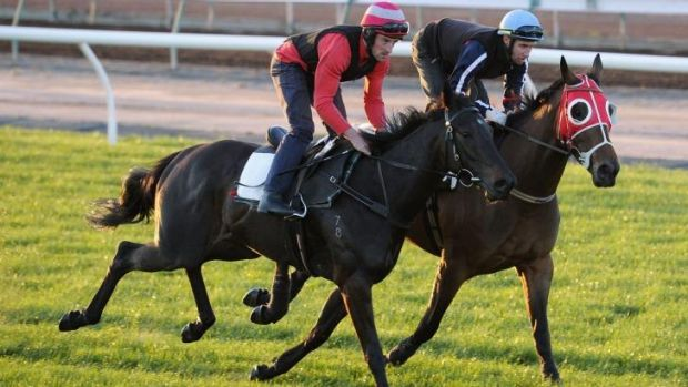 Silent Achiever (left) at Flemington on Tuesday.
