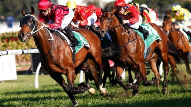 No Epsom ... Corey Brown rides Rock Sturdy to win the Shannon Stakes at Rosehill.