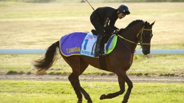 Easy does it: Admire Rakti, ridden by Kiyoshi Shikato, gets the feel of Werribee track during a working gallop on Wednesday.