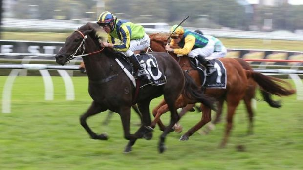 Lucia Valentina in action at Randwick earlier this month.