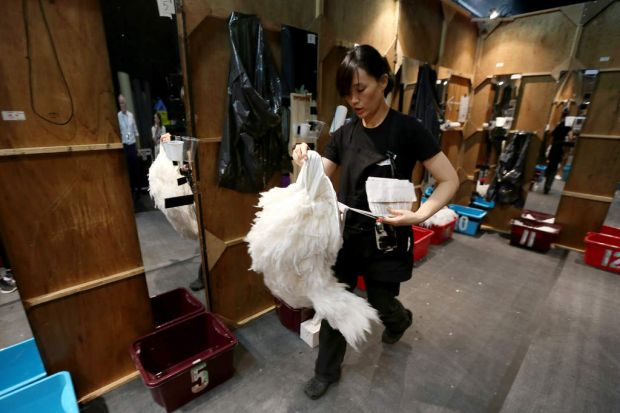 A local crew member carries swan legs inside the backstage dressing area.